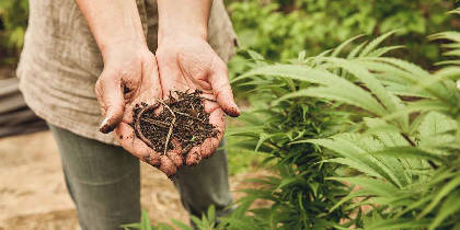 Growing Your Own Cannabis, the Organic Way
