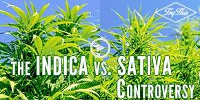 Are we thinking about indica and sativa all wrong?