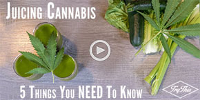 5 Essential Points About Cannabis Juicing