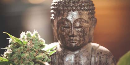 How Cannabis Treats Opioid Addiction
