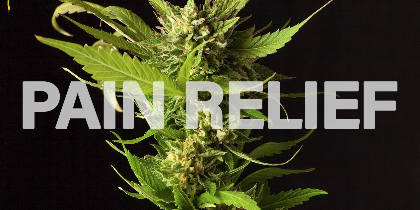 Cannabis: A Healthier Alternative for Chronic Pain