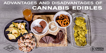 an introduction to the advantages and disadvantages of cannabis sativa