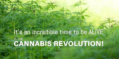 The Netflix of cannabis education is coming soon...
