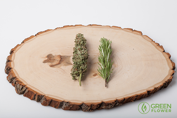 Alpha-pinene is a great terpene to look at when combining cannabis and asthmaasthma