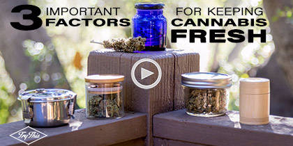 How to Store Your Cannabis the Right Way