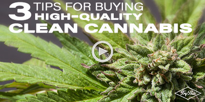 How to Ensure You're Consuming Safe, Clean Cannabis