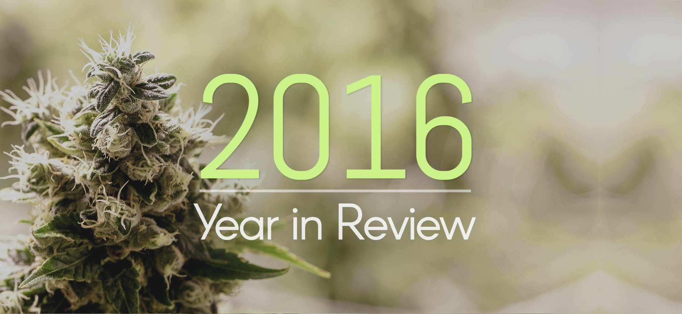Thanks To You, Here's What Green Flower Accomplished In 2016