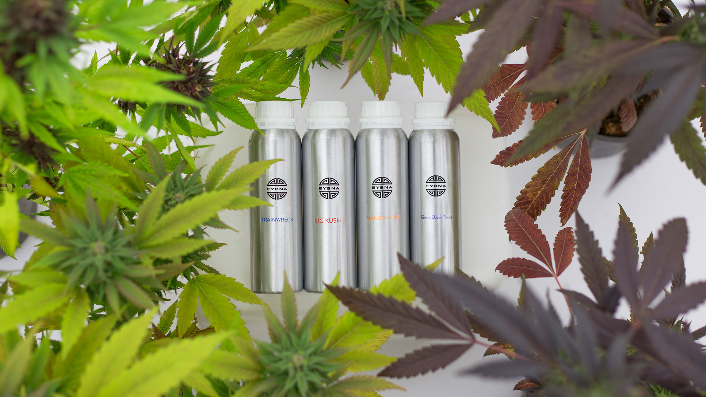 Terpene formulation cannisters