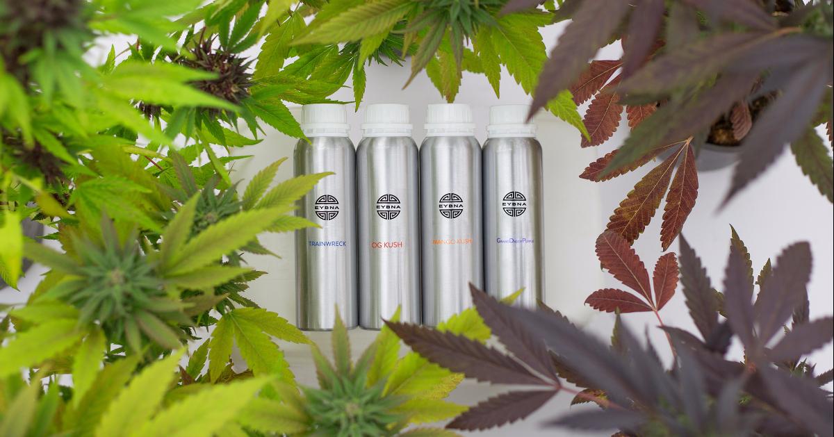 A Medical Cannabis R&D Revolution?
