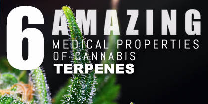 6 Amazing Medicinal Properties of Cannabis Terpenes