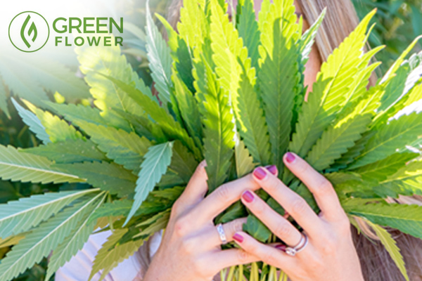 Women holding cannabis leaves in front of her face