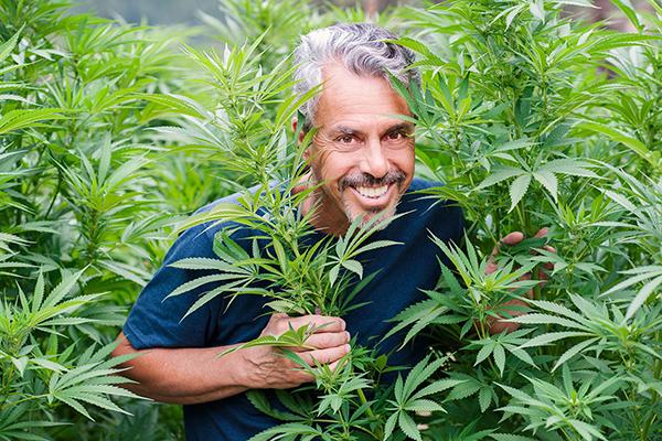 Chris Kilham in a cannabis field