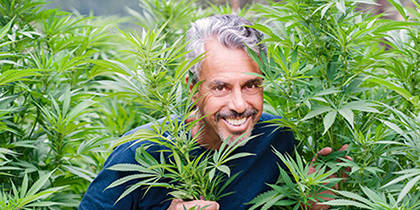 The Indiana Jones of Plant Medicine Talks Cannabis