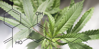 The Top Misconceptions about CBD