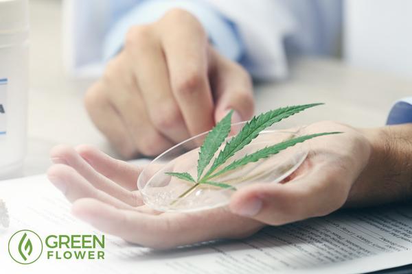 Physician holding cannabis leaf