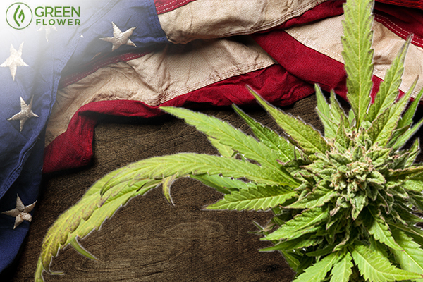 cannabis with American flag