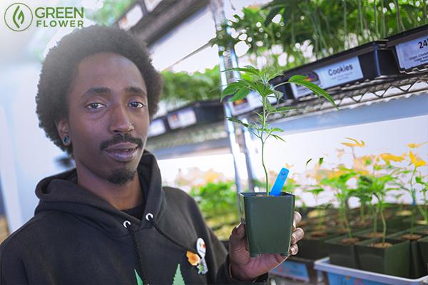 Man holding cannabis clone