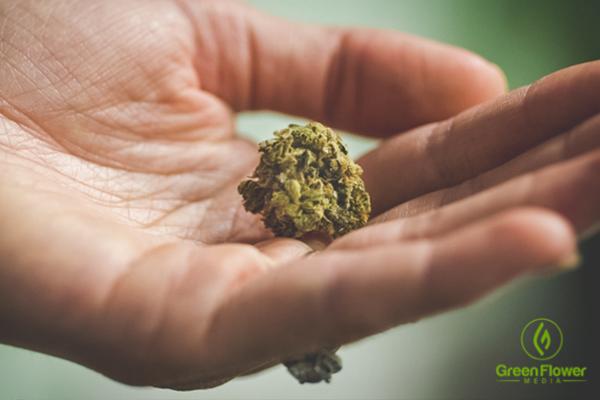 Holding a dried cannabis bud