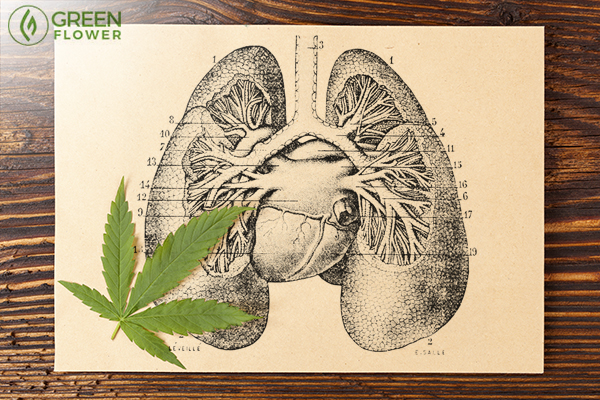 Diagram of lungs with cannabis leaf