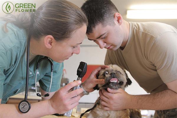 Veterinarians with patient
