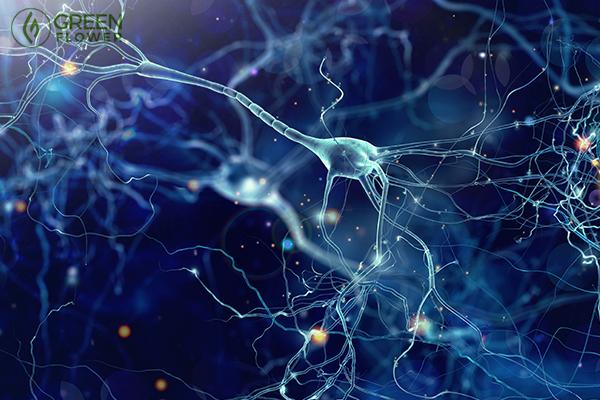 neurotransmitter graphic