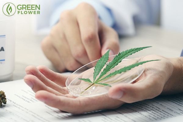 doctor with cannabis leaf