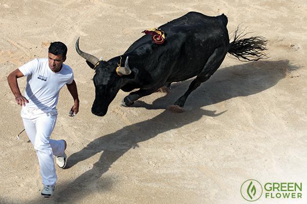 bull fighter