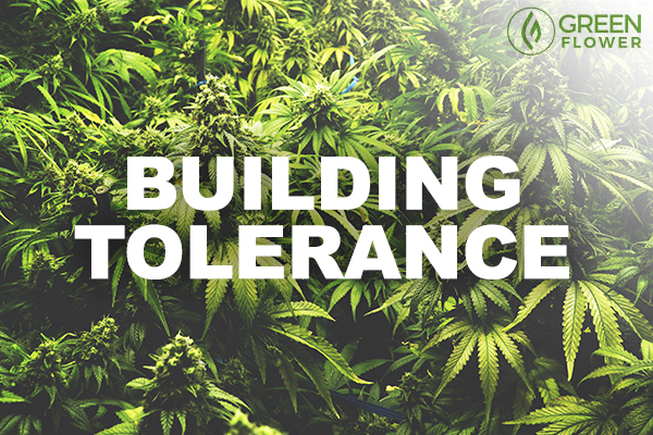 Cannabis tolerance