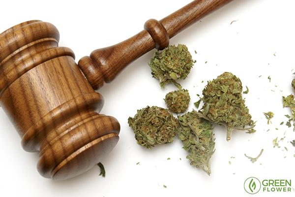 gavel with cannabis buds