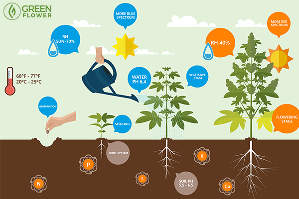 how roots work graphic