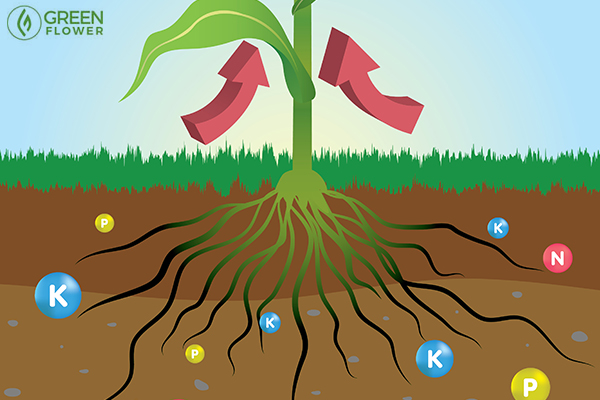 plant roots graphic