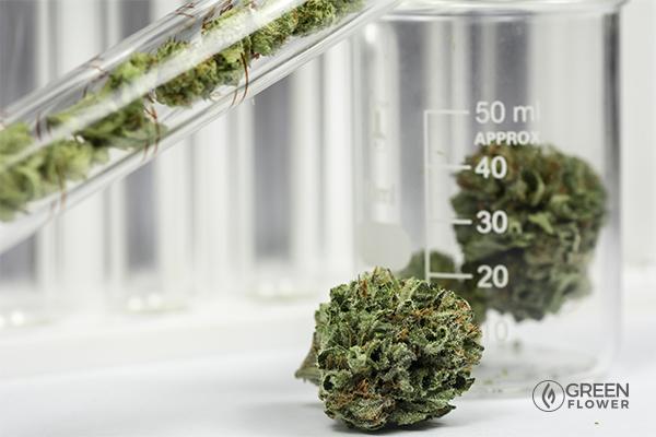 cannabis in a beaker