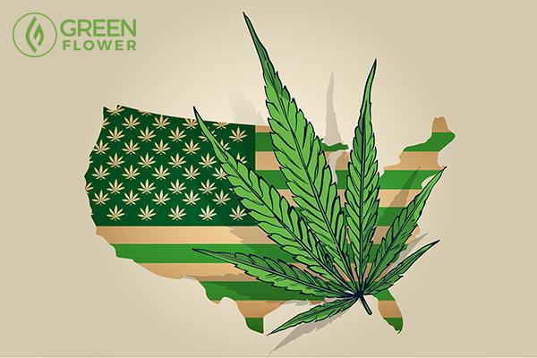 cannabis leaf over usa map