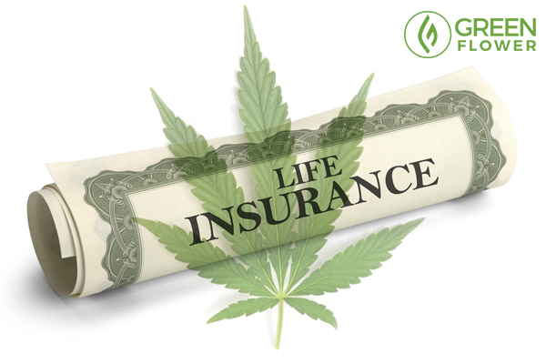cannabis and life insurance policy