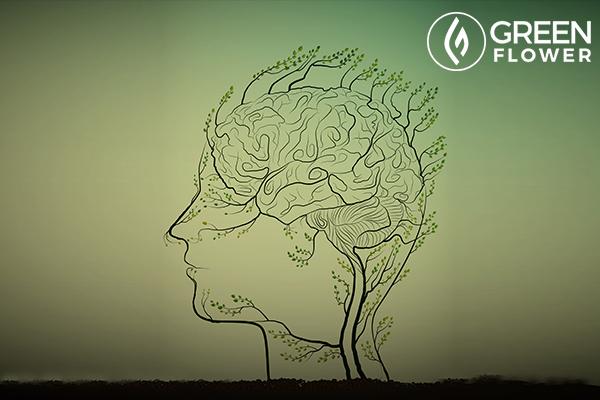man brain looks like tree