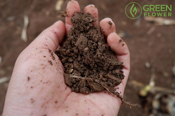 handful soil holding hand