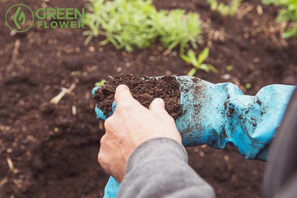 man assesses quality soil