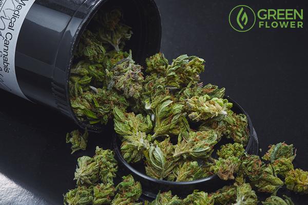 cannabis mini sour diesel