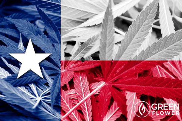 texas state flag on cannabis background