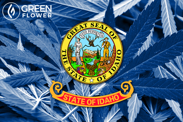 idaho state flag on cannabis background