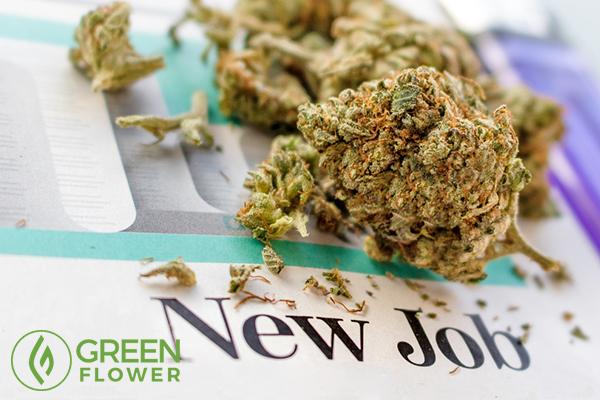 job in cannabis industry