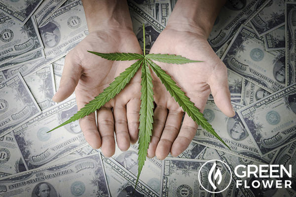 man holding cannabis over us dollars