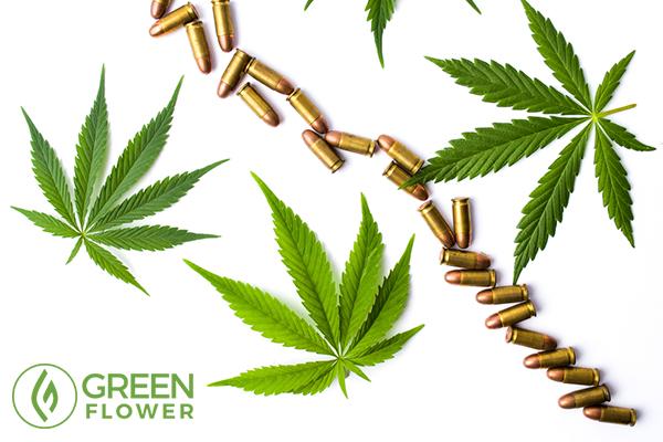 gun on cannabis leaves