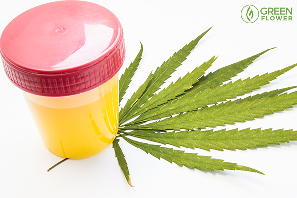 urine in bottle and cannabis
