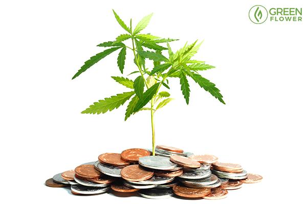 cannabis leaf on us dollars