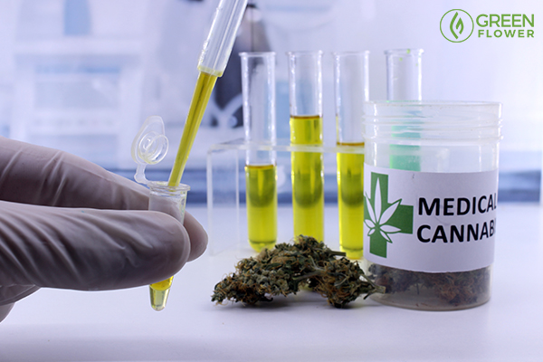 medical research on og kush cannabis