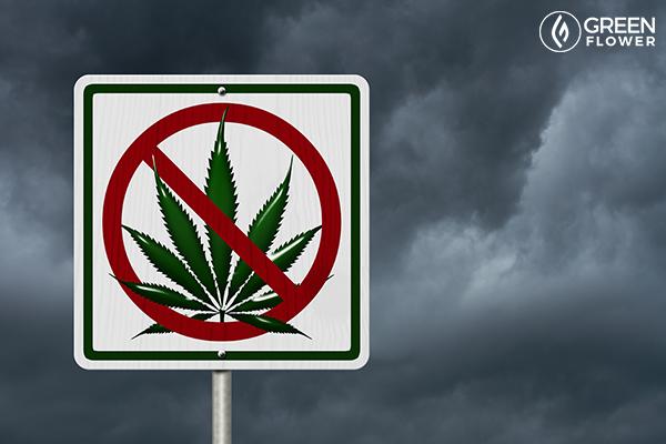 no cannabis road sign
