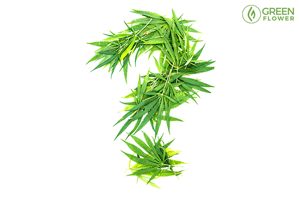 question mark made by green cannabis leaves