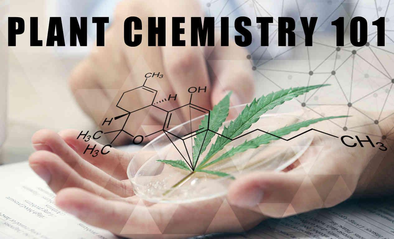 Cannabis Plant Chemistry