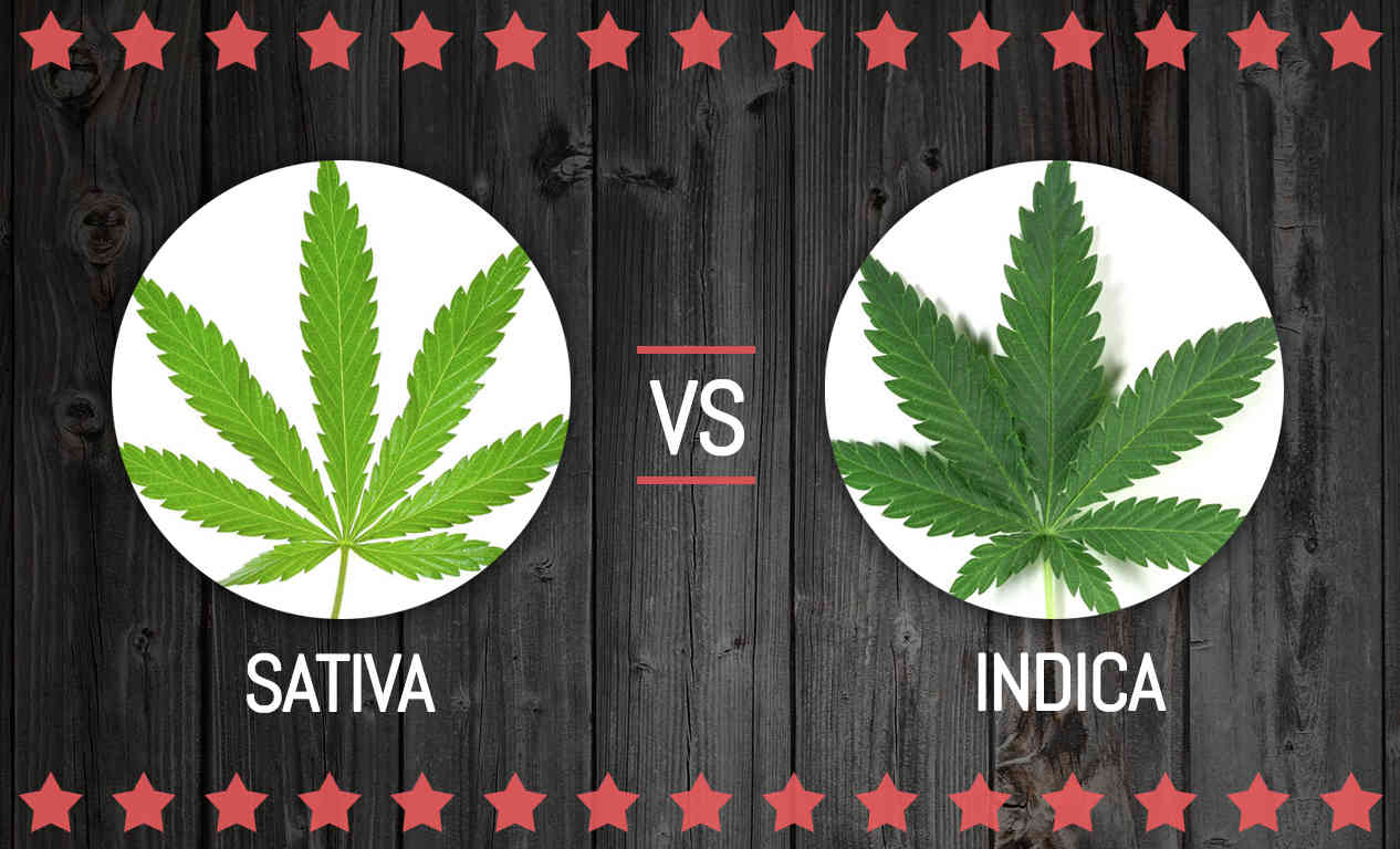 The Sativa-Indica Dilemma: Discover the Truth